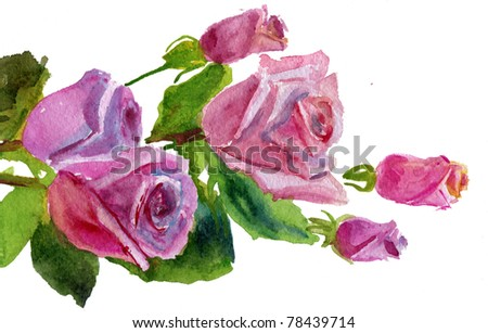 pink roses on white background. watercolor