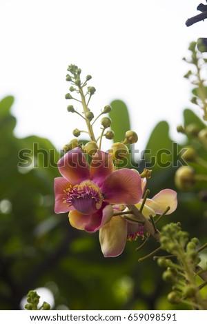 pink Sara flower blooming #659098591