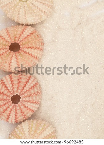 pink shells background
