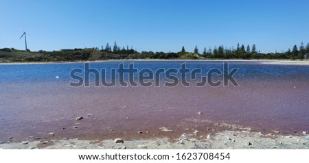 Pink shoreline of a lake