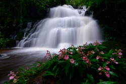 pink snapdragon flower at Man Daeng Waterfall, the beautiful waterfall in deep forest at Phu Hin Rong Kla National Park in Thailand
