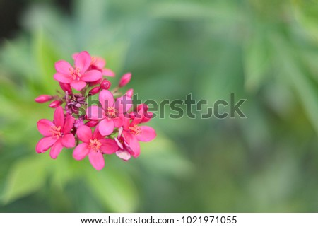 Free pink spike flower photos avopix pink spike flower 1021971055 mightylinksfo Image collections