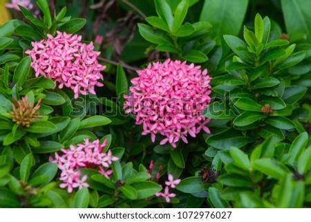 Free photos pink spike flower avopix pink spike flower 1072976027 mightylinksfo
