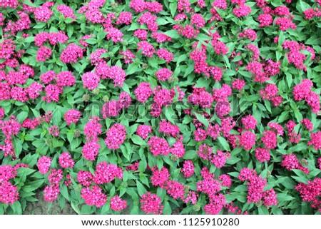 Free photos pink spike flower avopix pink spike flower 1125910280 mightylinksfo