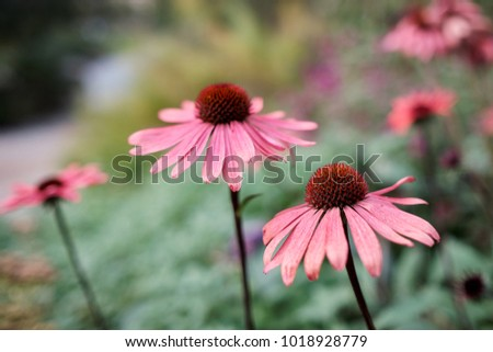 Free photos pink spiky flower avopix pink spiky flower 1018928779 mightylinksfo