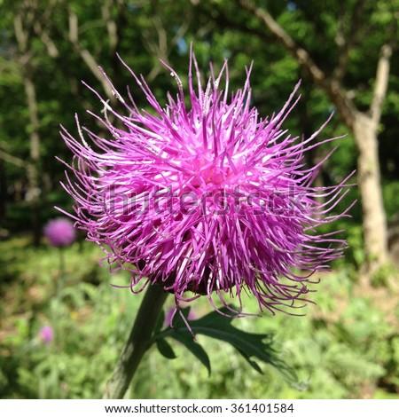 Free photos pink spiky flower in the garden avopix pink spiky flower in the garden 361401584 mightylinksfo