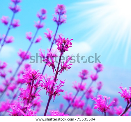 Pink spring flower field, abstract background with blue sky and sunlight