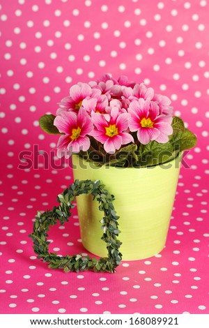 Pink spring flowers in a pot in front of pink dotted background