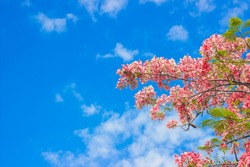 Pink spring flowers on a white sky background or artificial flowers on greeting card background.