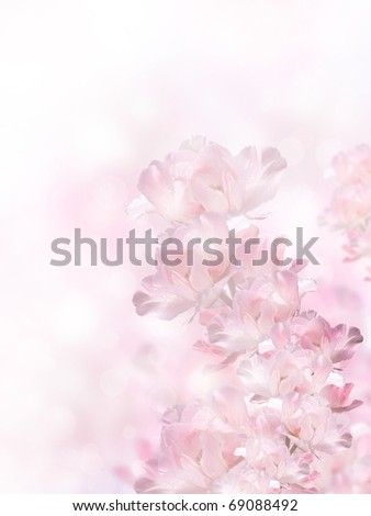 Pink spring flowers over the bokeh background