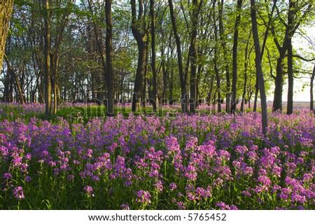 Pink Flower - Types Of Flowers | Tropical Flowers, Wild Flowers