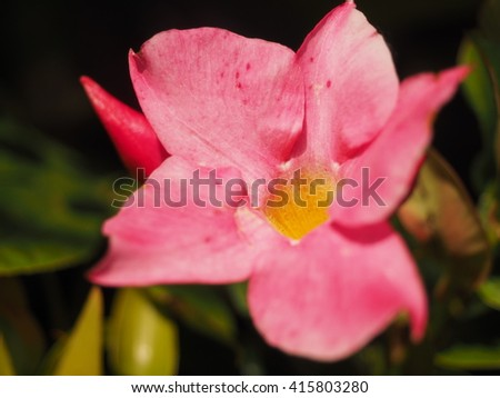 Free photos pink star shaped flowers are beautiful avopix pink star shaped flowers are beautiful 415803280 mightylinksfo