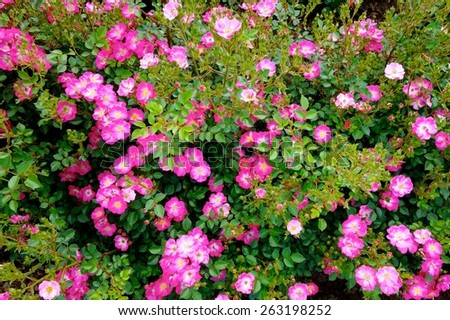 Free photos pink tiny flowers with green leaves background avopix pink tiny flowers 263198252 mightylinksfo