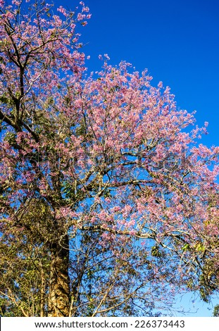 Pink trees in bloom. Spring apricot blossoms. Art Background , Branch with pink blossoms ,wallpaper. apricot-tree flowers.