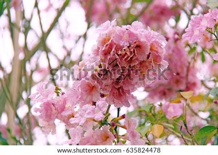 Pink trumpet flower ez canvas pink trumpet flower mightylinksfo