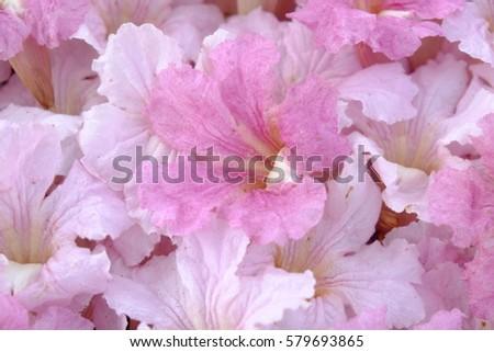 Pink Trumpet Flowers Ez Canvas