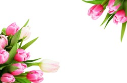 Pink tulip flowers corners isolated on white background