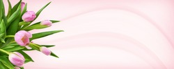 Pink tulip flowers in a corner on pink waved background
