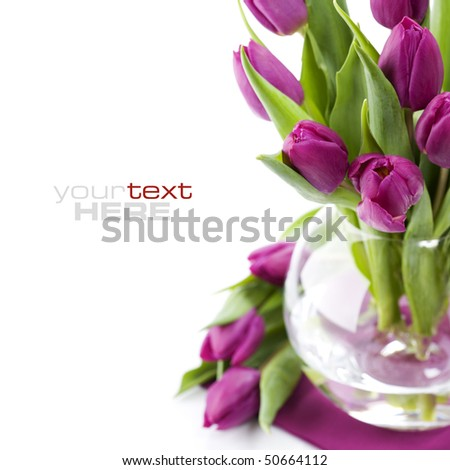 Pink tulips in a vase on white background. With sample text.