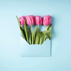 Pink tulips in envelope on blue background. Valentine's, mother's day or spring mockup with white card. Flat lay, top view.