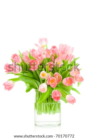 Pink tulips in the vase isolated on white background