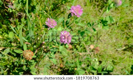 Pink wild flowers growing along the Elm Creek Hiking Trail Stock photo ©