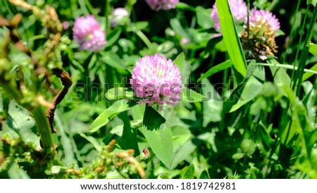Pink wildflowers growing along the Elm Creek Hiking Trail Stock photo ©