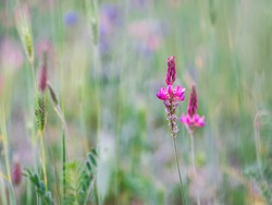Pink wildflowers on a green natural background. Fresh grass. Flower meadow.  Selective focus