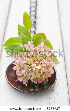 Pinkish - green  Autumn Hydrangea flower on rich brown wood   spoon against rustic board. shallow dof