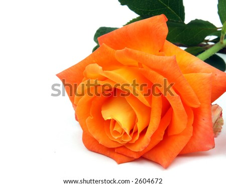 Pinkish Orange Color Name Pinkish orange color roses inPinkish Orange Color Name