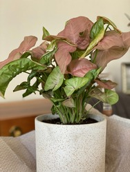 Pinky Interior Flower with Grean leaves; beauty of blossoms
