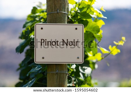 Pinot Gris wine grape variety sign on wooden pole selective focus, vineyard varieties signs, Okanagan valley wine region British Columbia, Canada