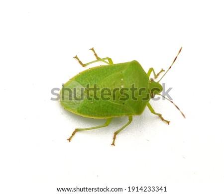 Pinterest Green bug | Green bug | Stink bug, stink beetle, white background