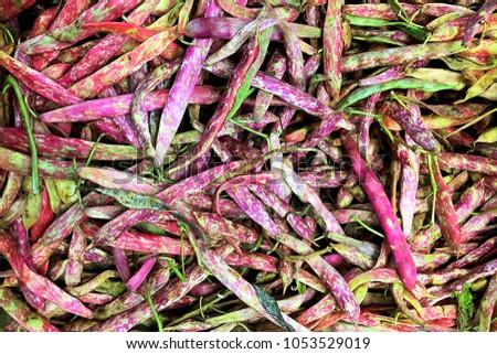 pinto beans, cranberry beans,shelling beans,Phaseolus vulgaris,borlotti bean,Roman bean,