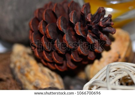 Pinus pinea, the pine, pine, mahogany pine or pine is an arboreal species of the family of pináceas that produces pineapples like this ideal to decorate #1066700696