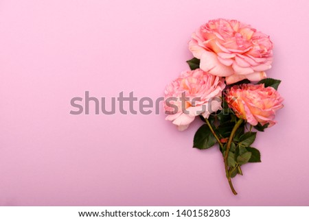 Pion-shaped roses, a bouquet of pion-shaped roses on a colored background, pink pion-shaped roses. Copy space for text. #1401582803