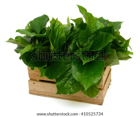 Piper lolot leaves in a wooden box isolated on a white background #410525734