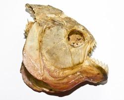 Piranha Skull 3