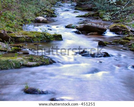 Pisgah Mountain Stream