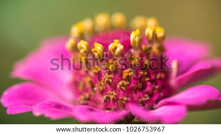 pistils and stamens of flowers #1026753967