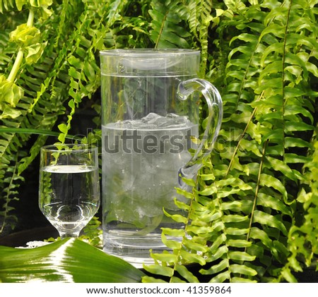 Pitcher of water surrounded by greenery