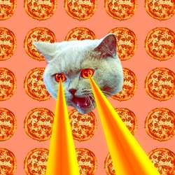 Pizza addict Cat with lasers from eyes. Animal fun collage art