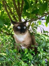 PJ in the garden