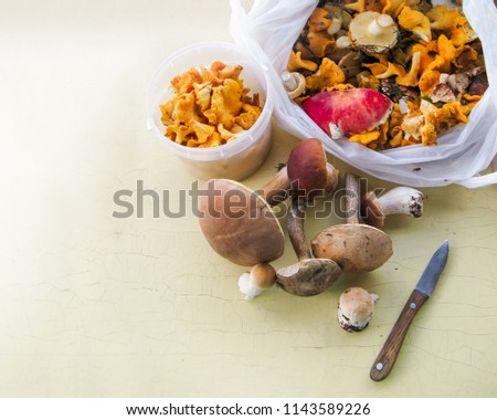 Placer of mushrooms, just collected in the forest. Mushroom picking from the forest.