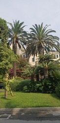 Places of rest as well as Palms and shrubs on the promenade of Italy in Finale Ligure