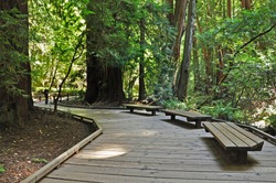 Places to rest on the boardwalk to admire the trees and breathe in the clean forest air in the Muir Woods near San Francisco California