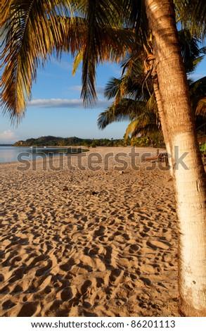 Plage et palmier au levée du soleil