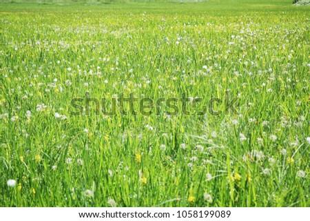 Plain and Grass #1058199089