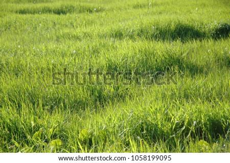 Plain and Grass #1058199095