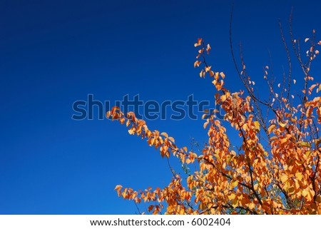 Plain bi-color fall background with bright orange leaves and deep blue ...
